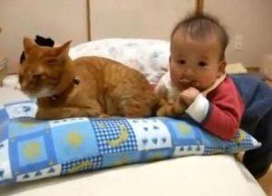 bébé mord et serre la queue du chat