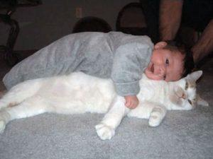 bébé allongé sur le chat