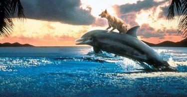 chien sur un dauphin