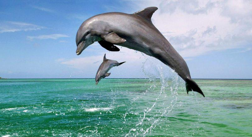 deux grands dauphins