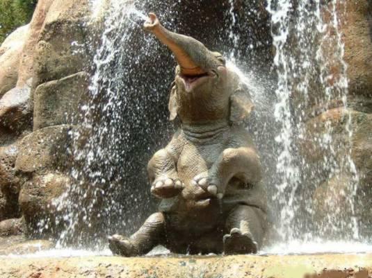 éléphant assis sous une cascade