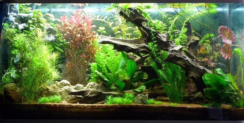 comment choisir son aquarium animaw. Black Bedroom Furniture Sets. Home Design Ideas