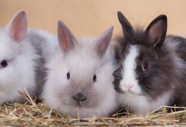 3 lapins