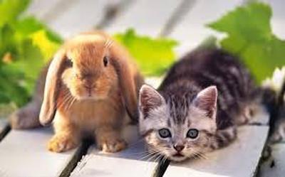 lapineau et chaton