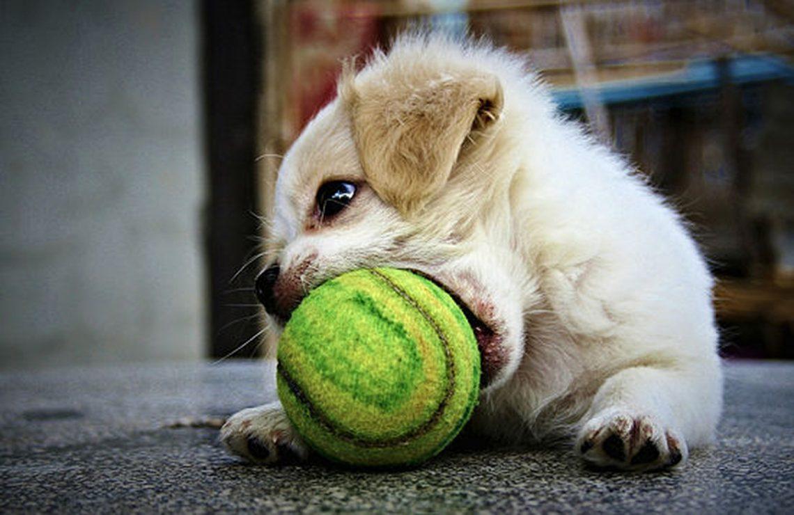quel jouet choisir pour votre chien