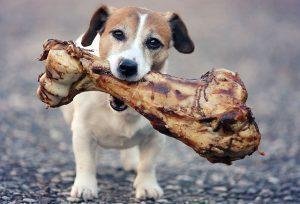os dans la gueule du chien